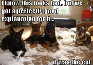 homless_dog_funny_5