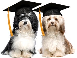 obedience-training-graduate
